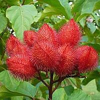 Аннато натуральный оранжевый пищевой краситель