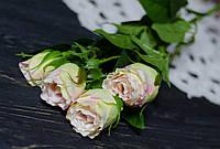 Ветка бутонов роз нежно-розового цвета премиум