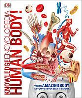 Книга Knowledge Encyclopedia Human Body