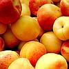 Бета-каротин желтый натуральный пищевой краситель