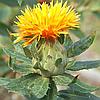 Картамус (Сафлора) жёлтый натуральный пищевой краситель