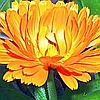 Лютеин натуральный желтый пищевой краситель