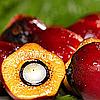 Натуральные каротины пищевые красители