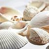 Белый натуральный пищевой краситель на основе карбоната кальция CapColors White 200 WSS-P