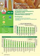 Насіння кукурудзи P9025, ФАО 330
