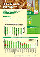 Насіння кукурудзи PR38A22, з ФАО 390