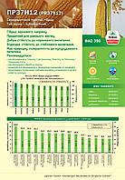Насіння кукурудзи PR37Y12, ФАО 390