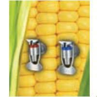 Семена кукурузы - НК Кулер