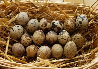Инкубационное яйцо перепелов
