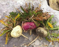 Maкa семена (перуанский женьшень)