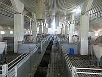 Вентиляція для свинокомплексу (свиноферми)