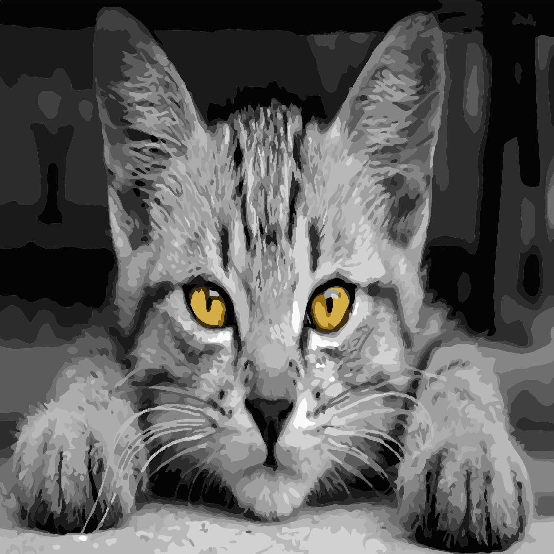 """Картина по номерам """"Серый кот"""" 40*40см: продажа, цена в ..."""