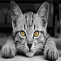 "Картина по номерам ""Серый кот"" 40*40см"