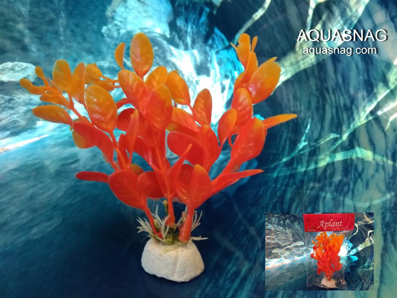 """Растение """"Aplant"""" - 10см, Е 20"""