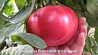 Томат Ванский розовый