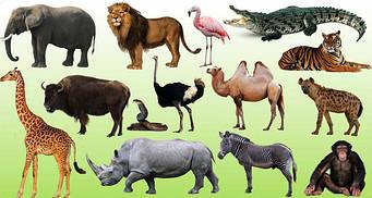 Тварини Різних