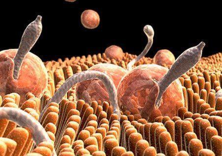 Ветоксик (Vetoxic) — таблетки от всех видов паразитов