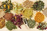 Монастырский сбор от гормональных заболеваний на основе натуральных трав, фото 2