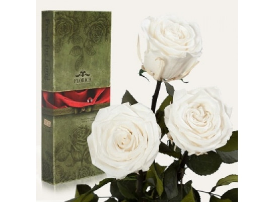 Три долгосвежие розы Белый Бриллиант в подарочной упаковке 228-1841233
