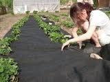 Агроволокно черное 50 г/м2 мульча, размер 3,2*100м.п.