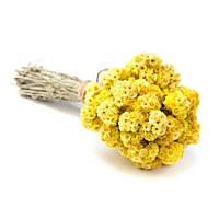 Цветки Бессмертника песчаного, 100 грамм (Flores Helichrysum arenarium, Сухоцвет)