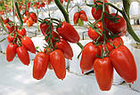 Насіння томату Айдар F1 (250 сем.) Clause, фото 2