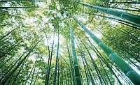 Фотообои 3D флизелиновые  368x254 см Высокий бамбуковый лес (150CN)