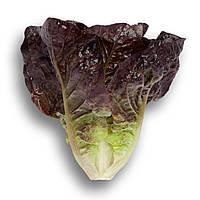 Ромен салат Галатея (Galatea RZ), 1000 семян, дражже, красный