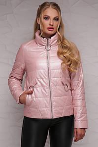 Женская короткая куртка демисезонная без капюшона на молнии, большие размеры пудра-металлик 18-126(б)