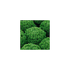 Салат полуголовчатый Лозано (Lozano RZ), 5000 семян, дражже