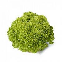 Салат полуголовчатый Лугано (Lugano RZ), 1000 семян, дражже