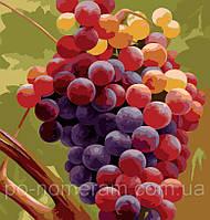 Рисование по номерам MG1124 Гроздь винограда 40 х 50 см, фото 1