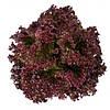 Салат полуголовчатый Сатин (Сатин RZ), 5000 семян, дражже