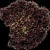 Насіння салату полуголовчатого Вілбур (Wilbur), 5000 сем., дражже, Rijk Zwaan