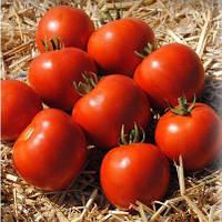 Семена томата Мамако F1 (2500 сем.)