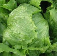 Насіння салату кочанного хрусткого Ясперинас (Jasperinas), 5000 сем. (тип Айсберг), дражже, Rijk Zwaan