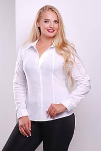 Женская белая приталенная рубашка с длинным рукавом для офиса большие размеры Норма д/р
