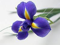 Ирисы фиолетовые свежие