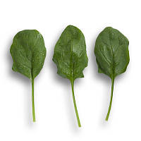 Семена шпината Боа / Boa (25 000, 1 млн. семян) Сингента