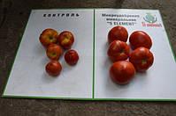 Результаты по помидорам 3