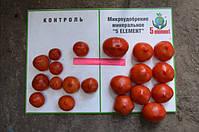 Результаты по помидорам 4