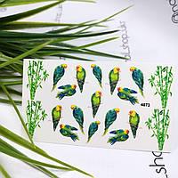 Слайдеры водные полноцветные дизайн