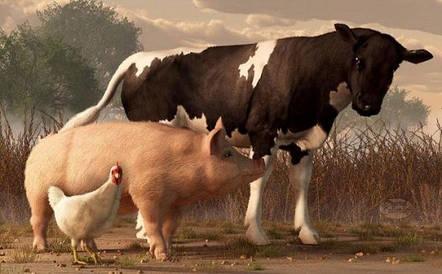 Премікси і концентрати для свиней, ВРХ, птиці