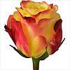 Оригинальная роза для букета Tutti Frutti (Тутти Фрутти)