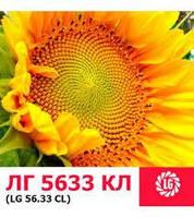 Семена подсолнечника Лимагрейн ЛГ 5633 КЛ Кру