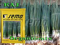 Лук на зелень КАЙ / KAJ, ТМ SEMO (Чехия), проф. пакет 500 грамм (ориентировочно 200 000 семян)