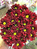 Бордовая кустовая хризантема Merlot (Мерлот), фото 1