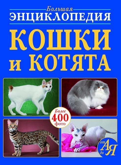 Кошки и котята от А до Я