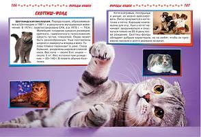 Кошки и котята от А до Я, фото 2