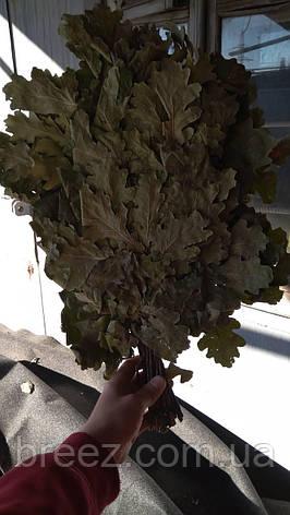 Веник для бани дубовый, фото 2